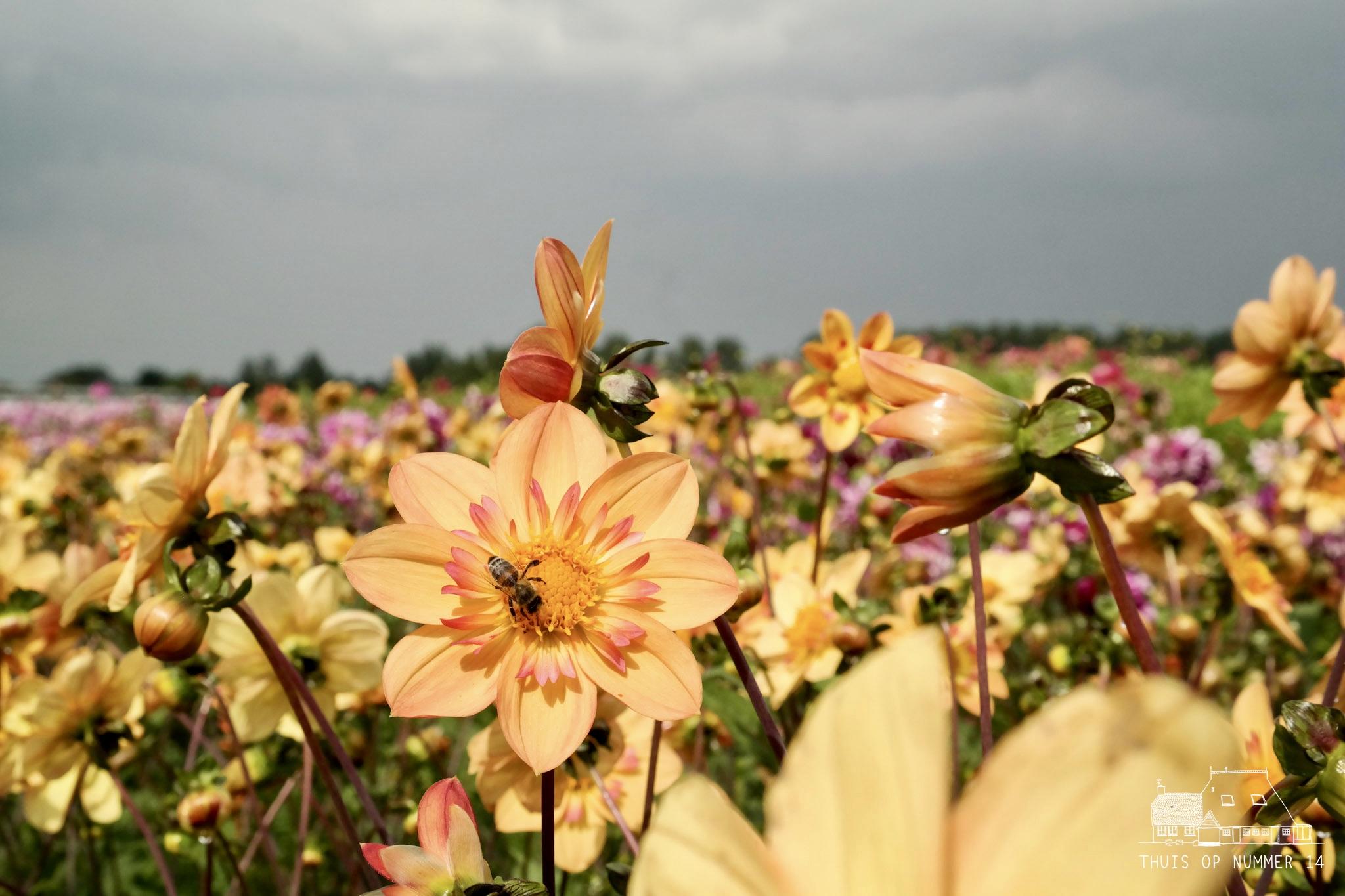 thuis op nummer 14 - FAM Flower Farm