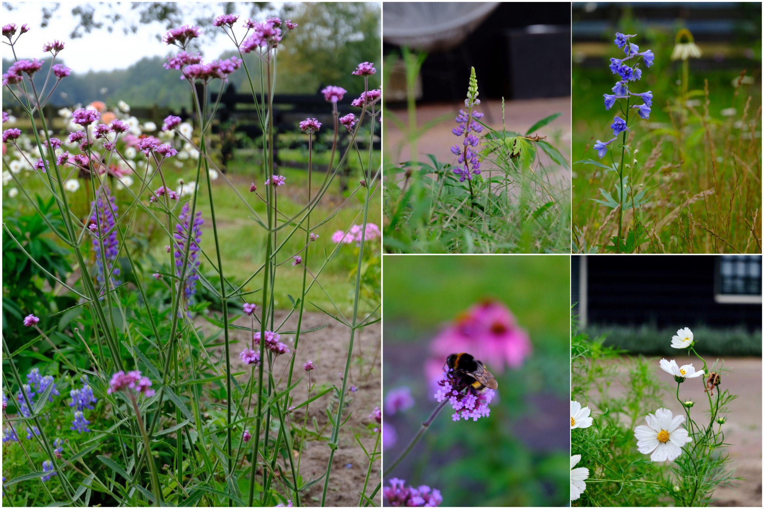 Van grasstrook naar een kleurrijke bloemenweelde.