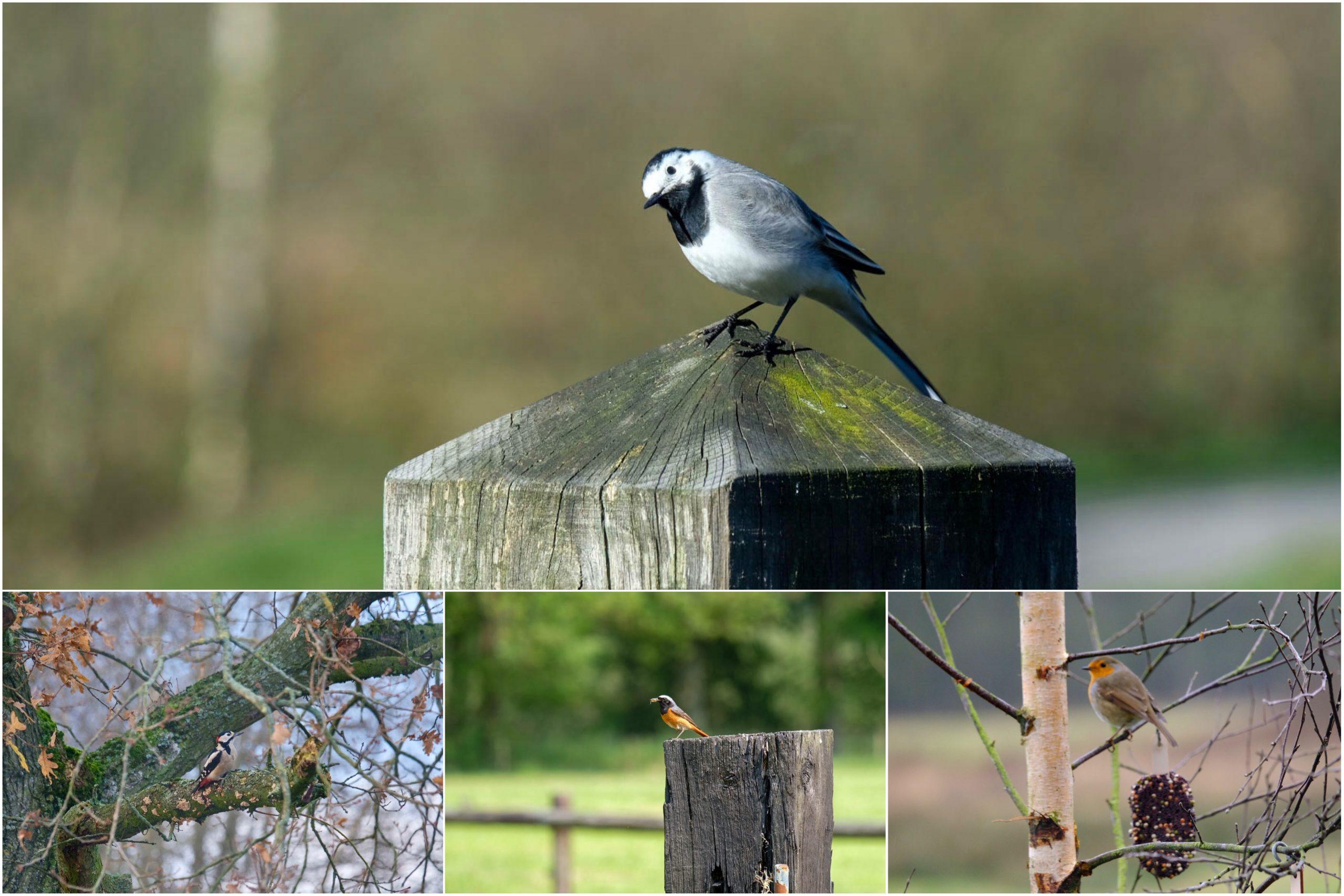 Vogels tellen ivm nationale tuinvogeltelling
