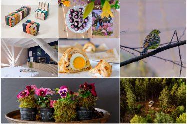 Foto collage thuis op nummer 14 - Maandelijks terugblik-en weetjesblog #3