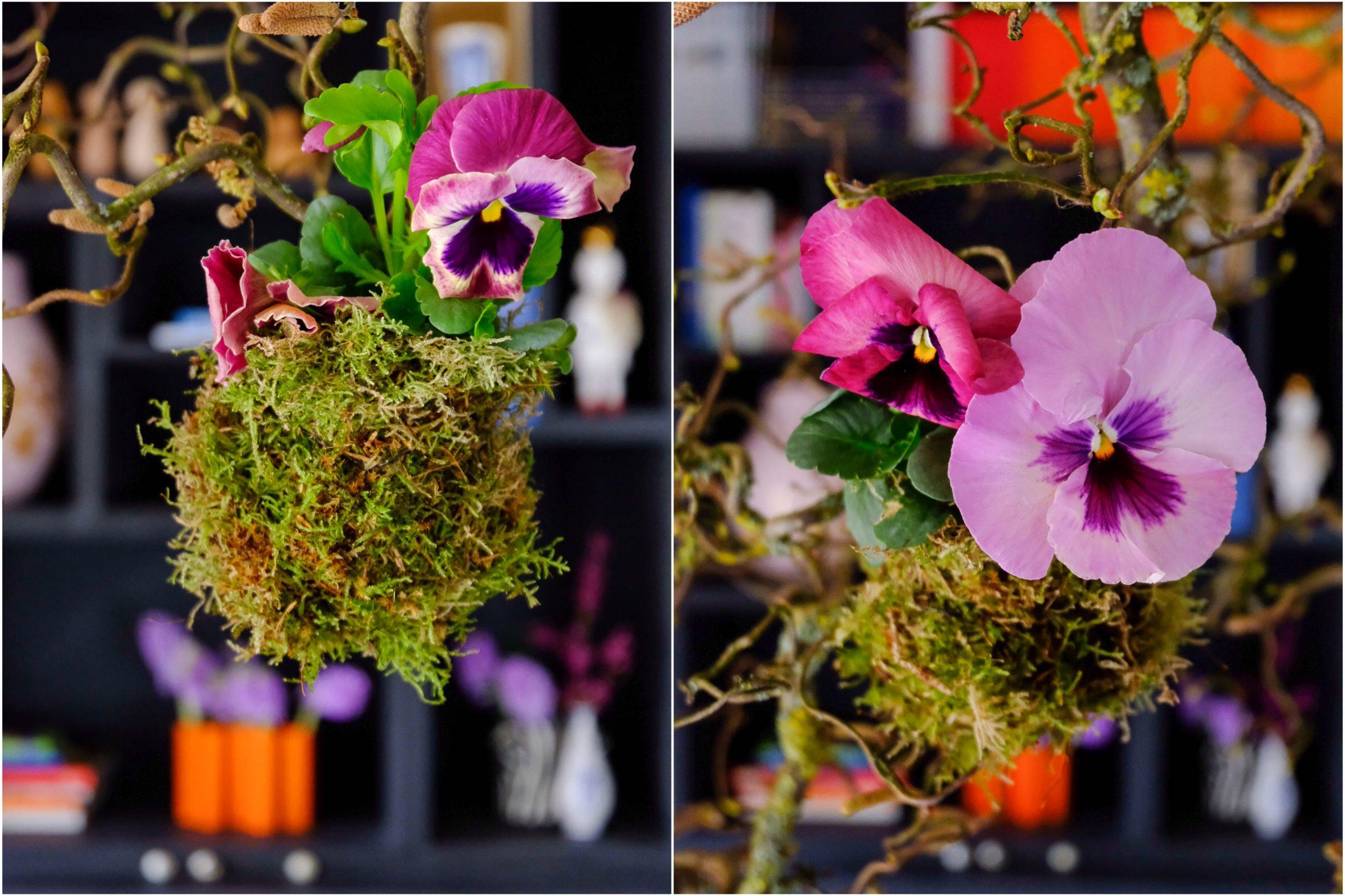Voorjaarshanger met viooltjes.