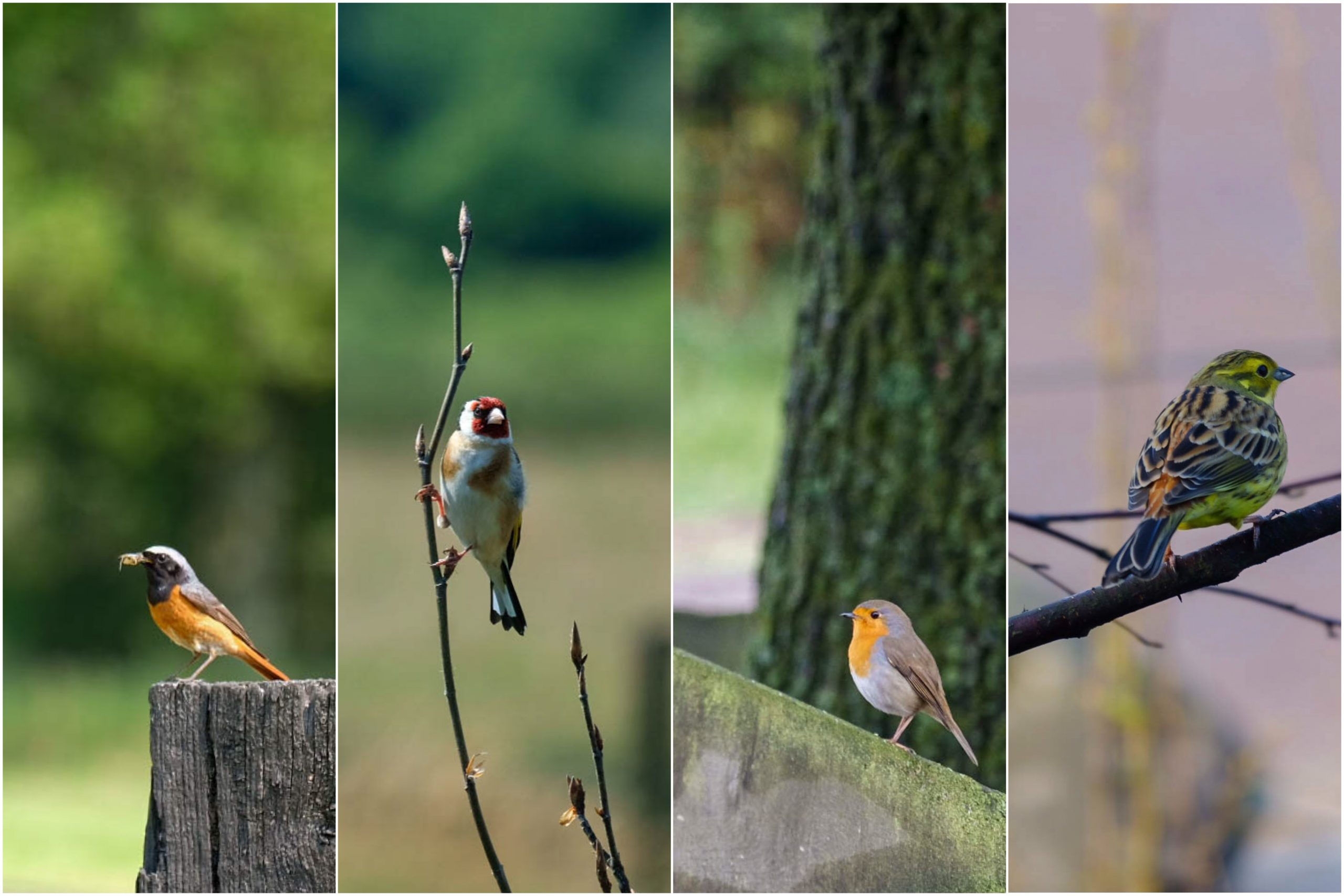 Vogels doorvoeren - Maandelijks terugblik-en weetjesblog #3