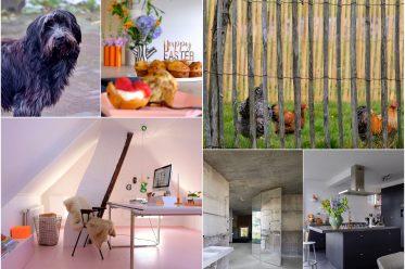 Collage foto's thuisopnummer14
